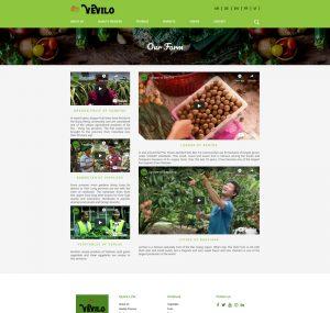 website-doanh-nghiep-vevilo (1)
